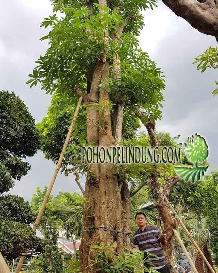 blog full penyedia tanaman pelindung
